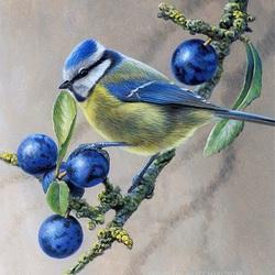 Пазл онлайн: Лазоревка (голубая синица)