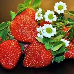 Пазл онлайн: Ягодки и цветочки