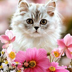 Пазл онлайн: Кисуля в цветах