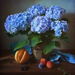 Пазл онлайн: Голубая гортензия