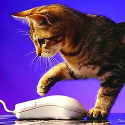 Пазл онлайн: Кошка и мышка