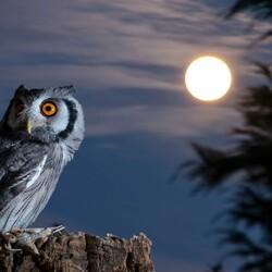 Пазл онлайн: Сова и Луна