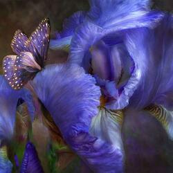 Пазл онлайн: Прекрасные ирисы и бабочка