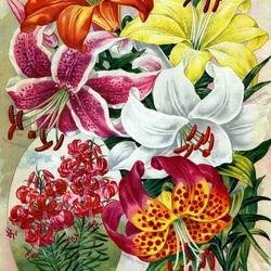 Пазл онлайн: Английские лилии