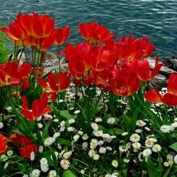 Пазл онлайн: Цветы у моря
