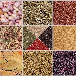 Пазл онлайн: Зерна, крупы и специи