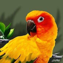 Пазл онлайн: Желто-красный попугай