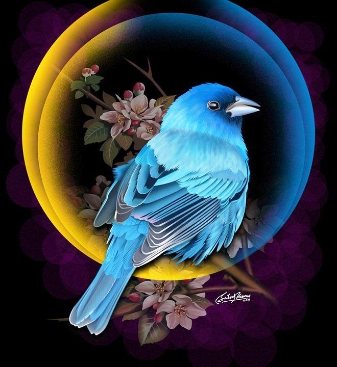 постеры с синей птицей