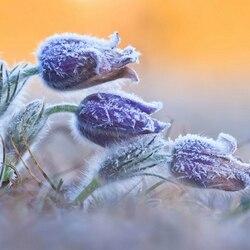 Пазл онлайн: Морозный солнечный рассвет