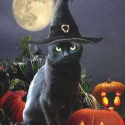 Пазл онлайн: Хэллоуинский кот