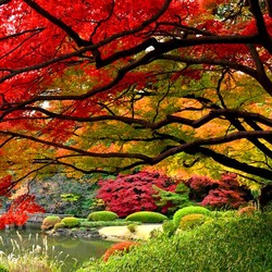 Пазл онлайн: Осень в токийском парке