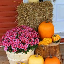 Пазл онлайн: Осень у дверей