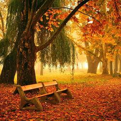 Пазл онлайн: Осенняя аллея