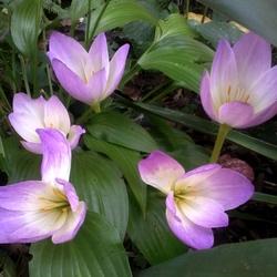 Пазл онлайн: Цветы сентября