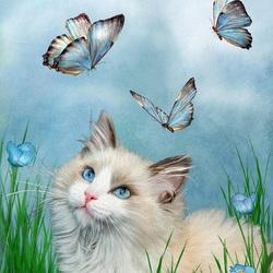 Пазл онлайн: Рэгдолл и бабочки