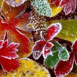 Пазл онлайн: Серебро на листьях