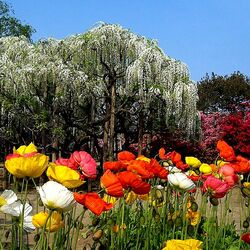 Пазл онлайн: Сад цветов
