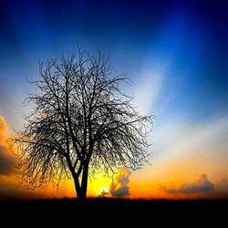 Пазл онлайн: Угадайте: Восход солнца или закат?