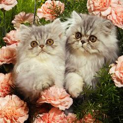 Пазл онлайн: Парочка лапочек в цветочках