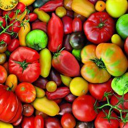 Пазл онлайн: Такие разные помидоры