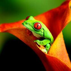Пазл онлайн: Лягушонка