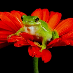 Пазл онлайн: Красавица на цветке