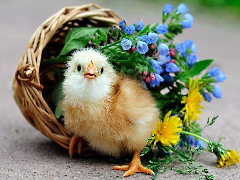 Открытки с днем рождения природа животные, картинки для производства