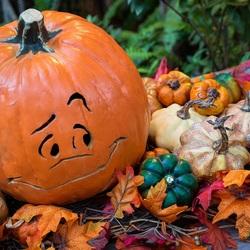Пазл онлайн: Тыквы к хэллоуину