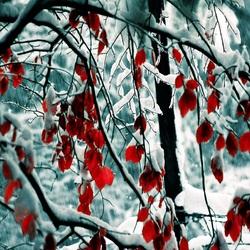 Пазл онлайн: Снег на листьях