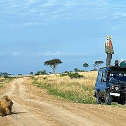 Пазл онлайн: Найди льва