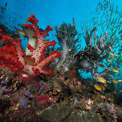 Пазл онлайн: Морские глубины
