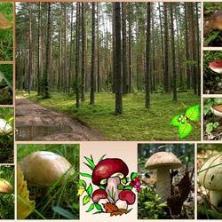 Пазл онлайн: Природа и грибы