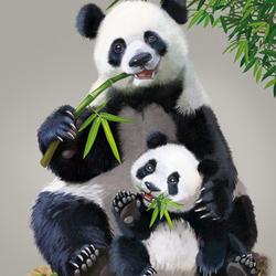 Пазл онлайн: Бамбуковые мишки