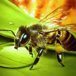 Пазл онлайн: Пчела