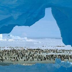 Пазл онлайн: Аборигены Антарктиды