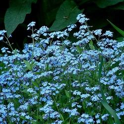 Пазл онлайн: Незатейливые цветочки