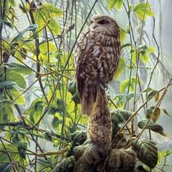 Пазл онлайн: Новозеландская сова