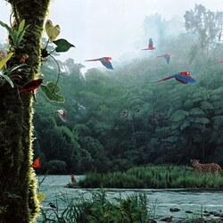 Пазл онлайн: Рандеву в тропическом лесу
