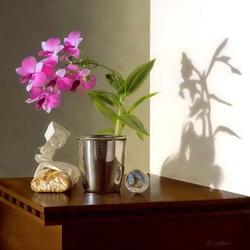 Пазл онлайн: Композиция с орхидеей