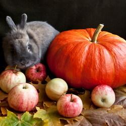 Пазл онлайн: Кролик и тыква