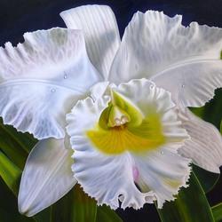 Пазл онлайн: Орхидея Каттлея