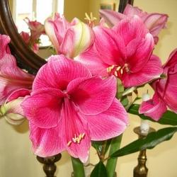Пазл онлайн: Цветы у зеркала