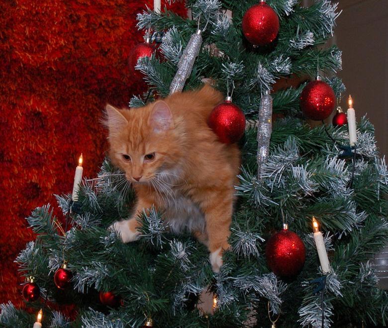 Елка и коты картинки