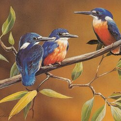 Пазл онлайн: Птички