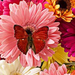 Пазл онлайн: Красная бабочка на букете цветов