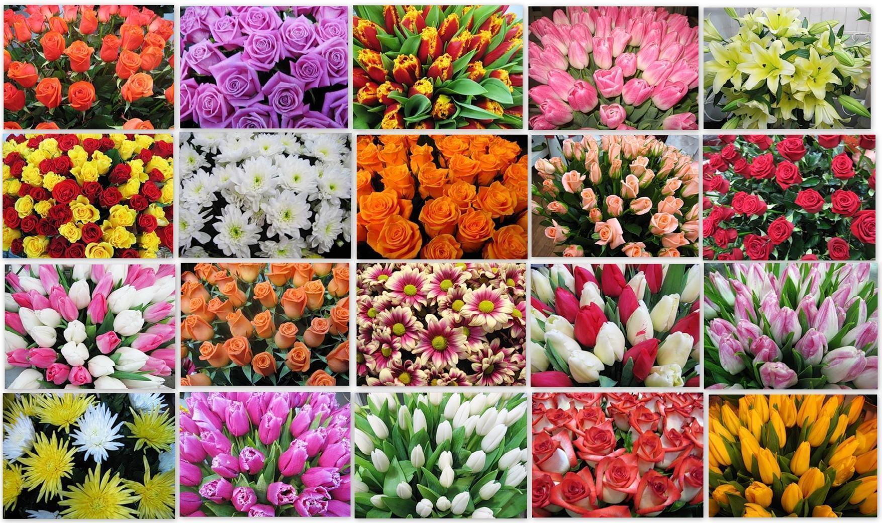получил разные цветы на одной картинке повторяет аромат сперва