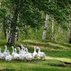 Пазл онлайн: На полянке