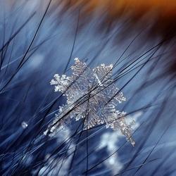 Пазл онлайн: Метель и натуральная снежинка