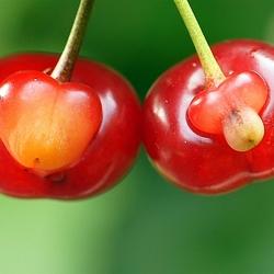 Пазл онлайн: Адам и Ева