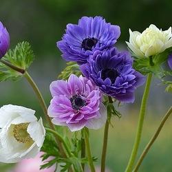 Пазл онлайн: Разноцветье